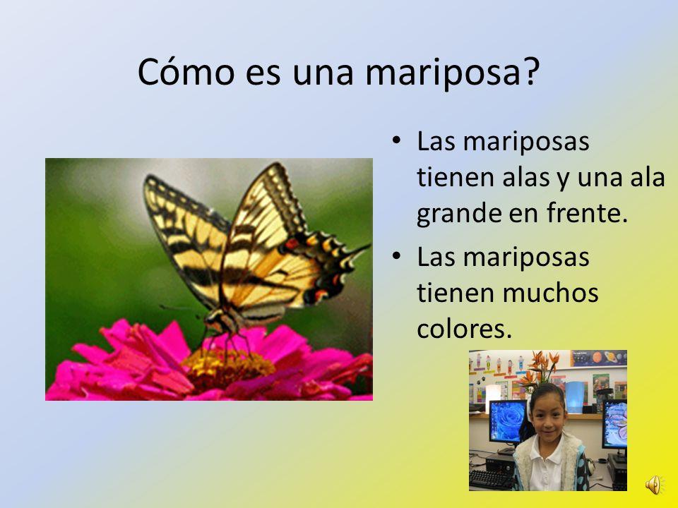 Cómo es una mariposa.Las mariposas tienen alas y una ala grande en frente.