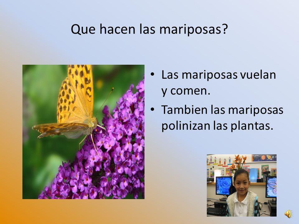 Que hacen las mariposas? Las mariposas vuelan y comen. Tambien las mariposas polinizan las plantas.