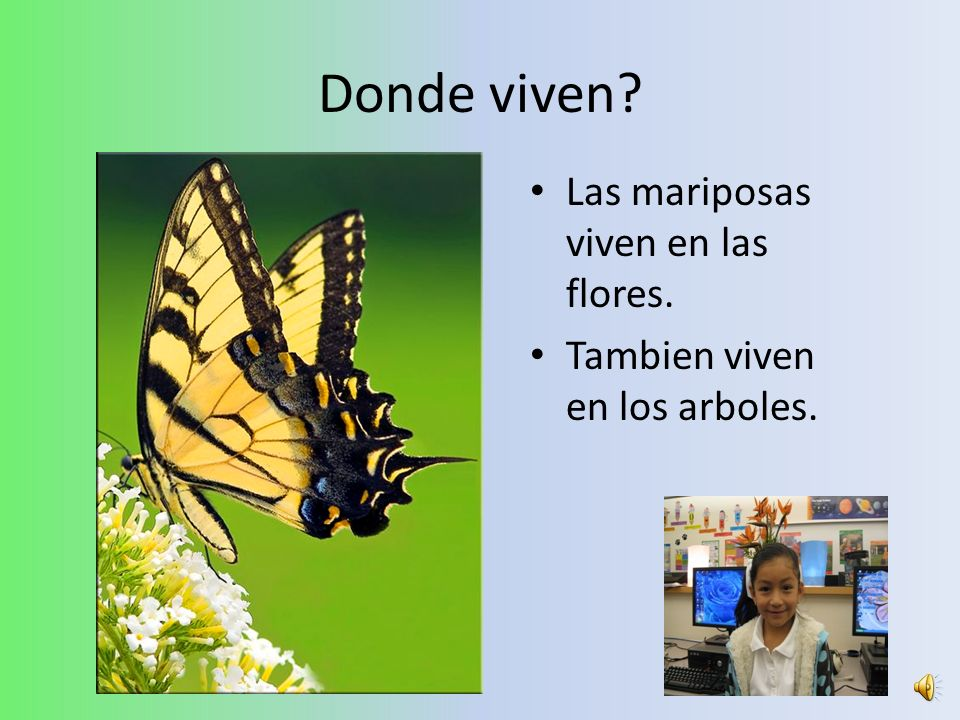 Donde viven? Las mariposas viven en las flores. Tambien viven en los arboles.