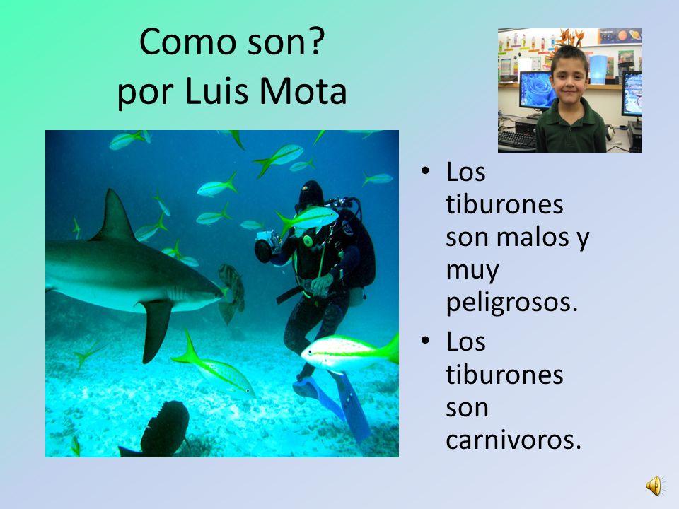 1 st Grade ELA-S Sample Powerpoints Los Tiburones Luis Mota Las Mariposas Diana Maldonado Perros Policias Diego Enriquez Mi Familia Lesley Padilla Mon