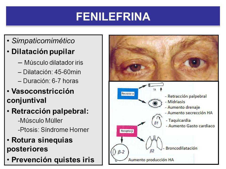 Simpaticomimético Dilatación pupilar – Músculo dilatador iris – Dilatación: 45-60min – Duración: 6-7 horas Vasoconstricción conjuntival Retracción pal