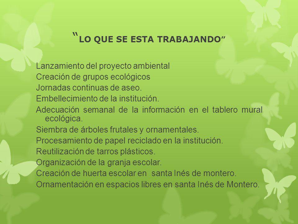 LO QUE SE ESTA TRABAJANDO Lanzamiento del proyecto ambiental Creación de grupos ecológicos Jornadas continuas de aseo. Embellecimiento de la instituci