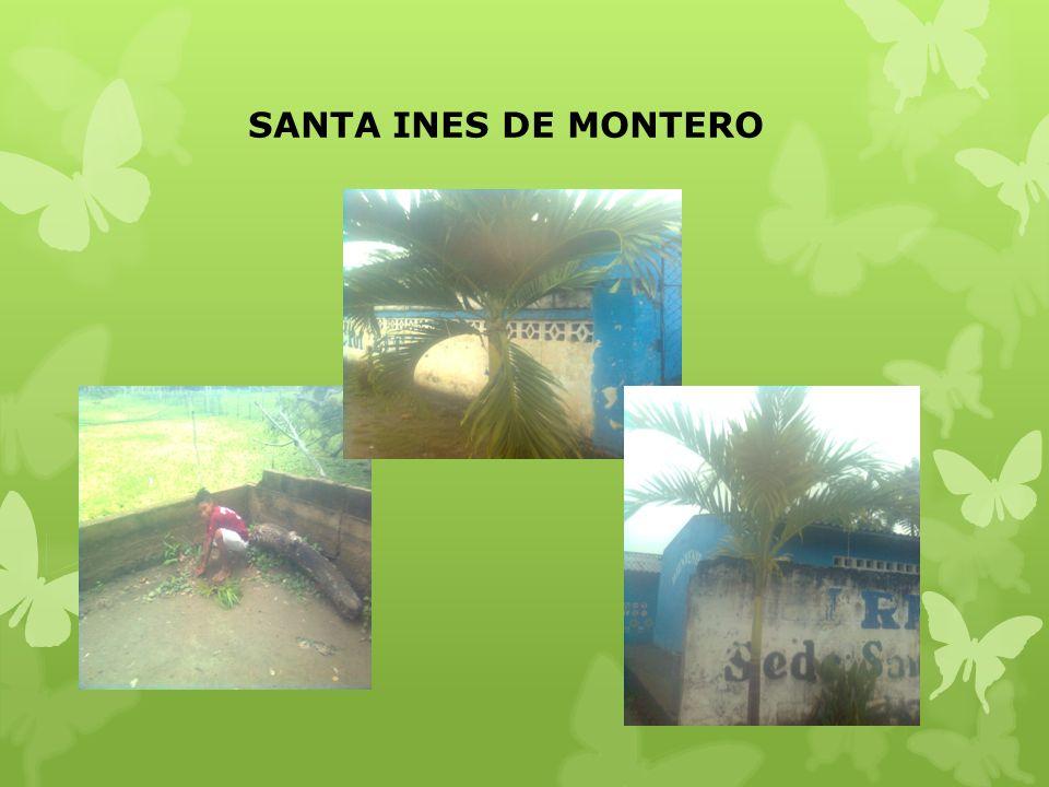 SANTA INES DE MONTERO
