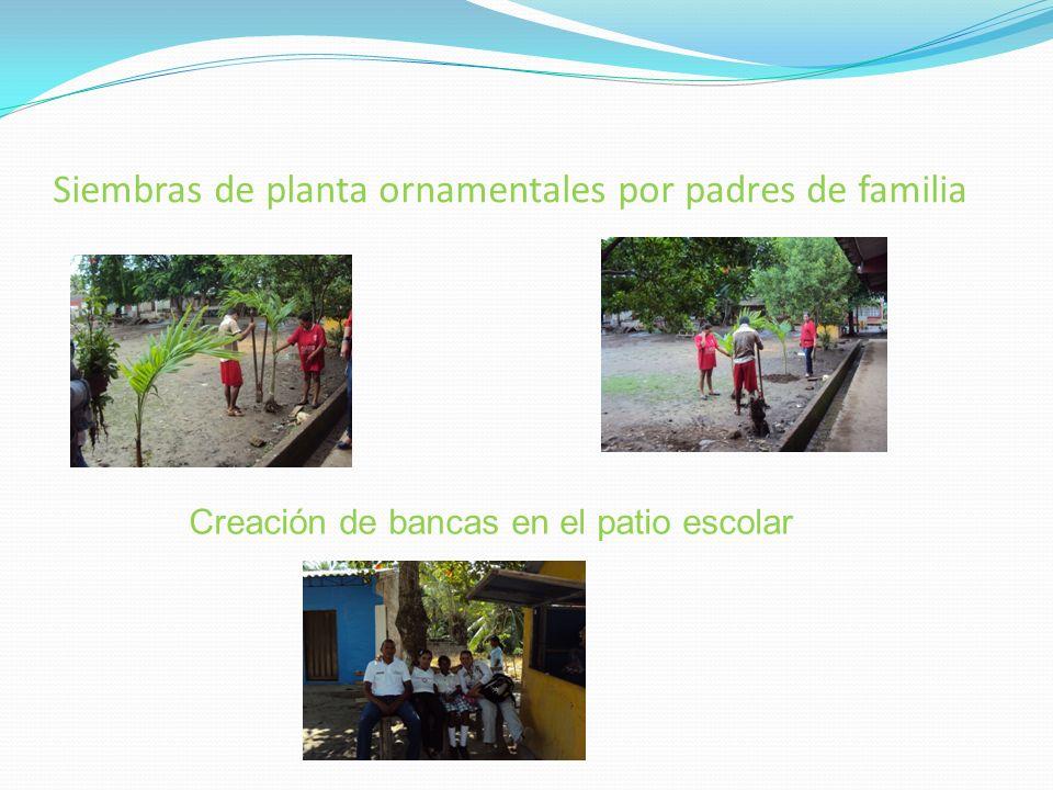 Siembras de planta ornamentales por padres de familia Creación de bancas en el patio escolar