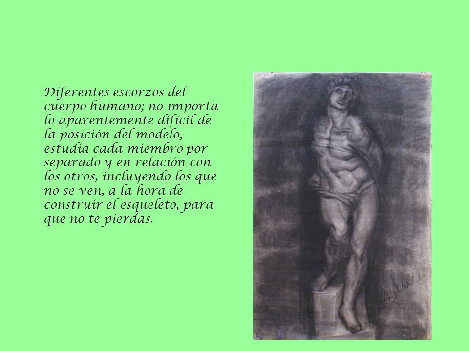 Diferentes escorzos del cuerpo humano; no importa lo aparentemente difícil de la posición del modelo, estudia cada miembro por separado y en relación