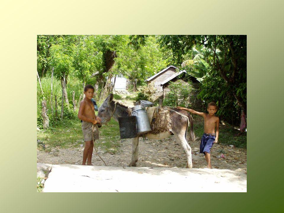 IGLESIA EVANGELICA LUTERANA DE LA REPUBLICA DOMINICANA Nuestro deseo es SERVIR