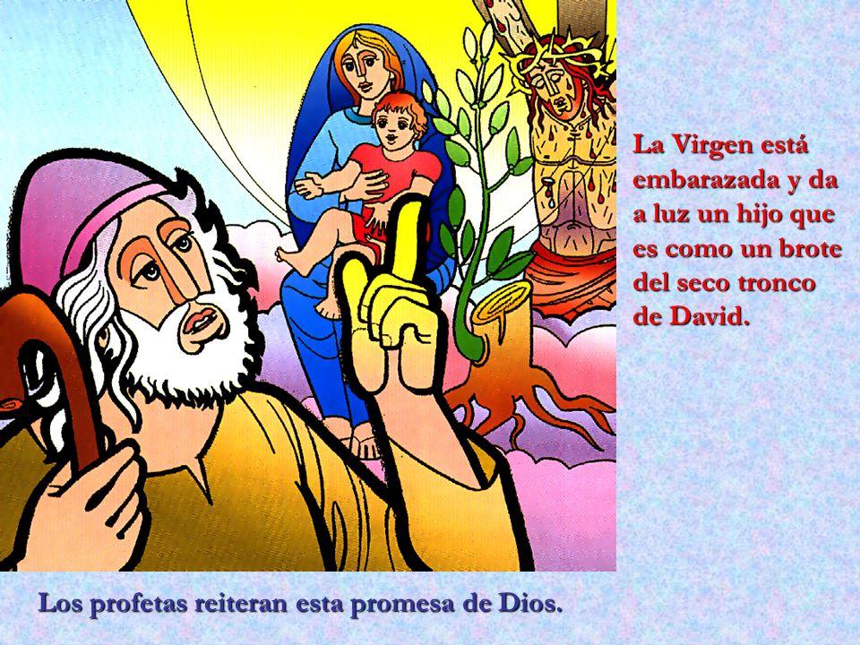 Los profetas reiteran esta promesa de Dios. La Virgen está embarazada y da a luz un hijo que es como un brote del seco tronco de David.