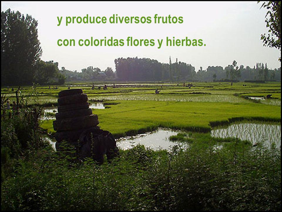 y produce diversos frutos con coloridas flores y hierbas.