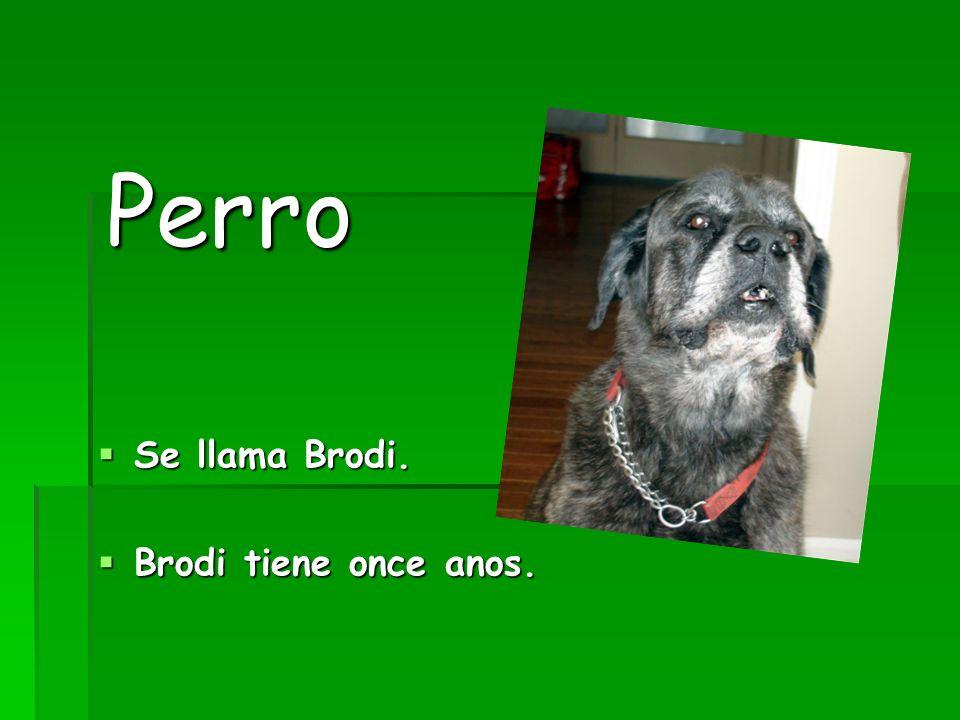 Perro Se llama Brodi. Se llama Brodi. Brodi tiene once anos. Brodi tiene once anos.