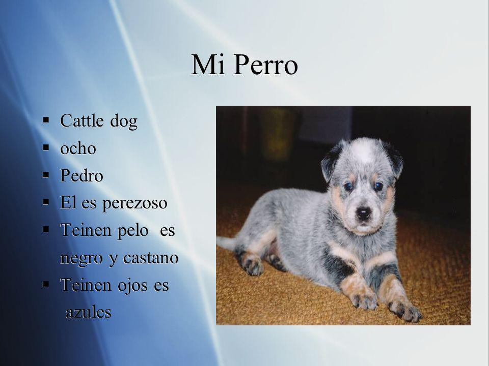 Mi Perro Cattle dog ocho Pedro El es perezoso Teinen pelo es negro y castano Teinen ojos es azules Cattle dog ocho Pedro El es perezoso Teinen pelo es