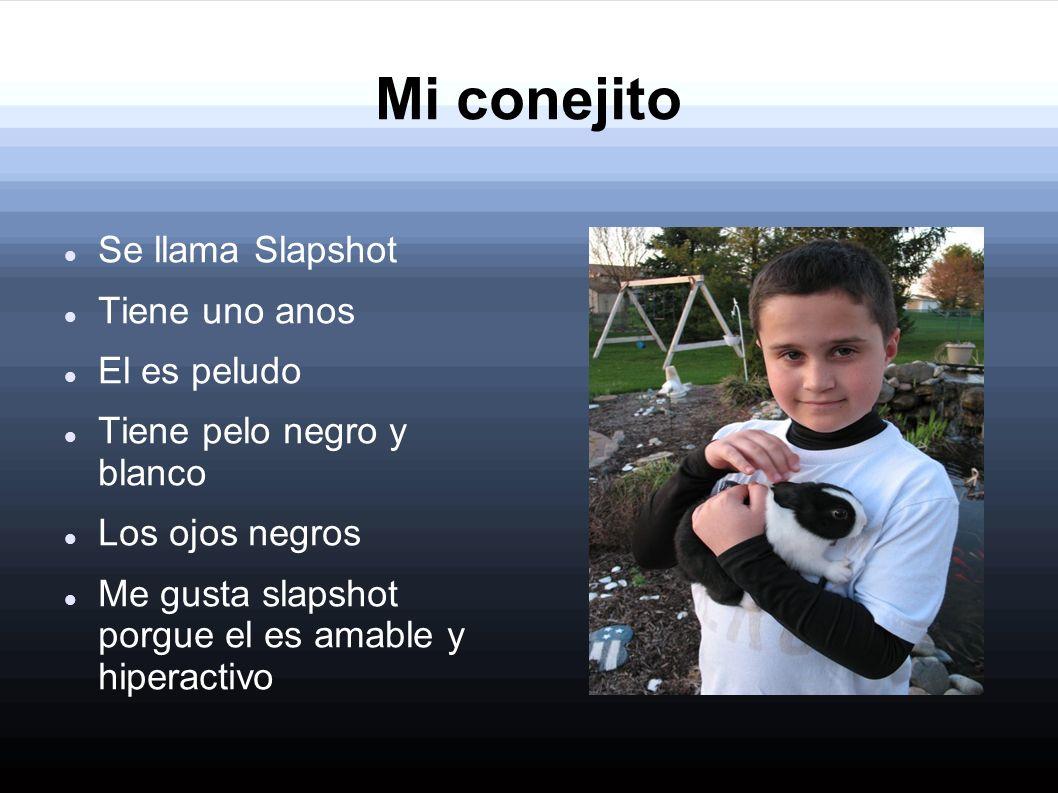 Mi conejito Se llama Slapshot Tiene uno anos El es peludo Tiene pelo negro y blanco Los ojos negros Me gusta slapshot porgue el es amable y hiperactiv