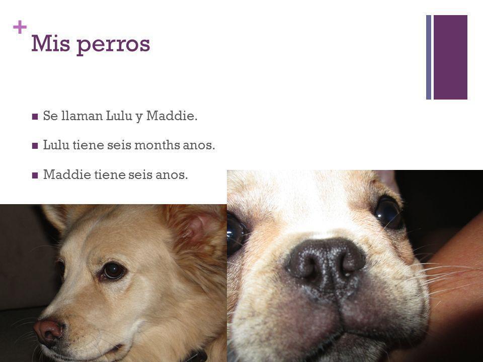 + Mis perros Se llaman Lulu y Maddie. Lulu tiene seis months anos. Maddie tiene seis anos.