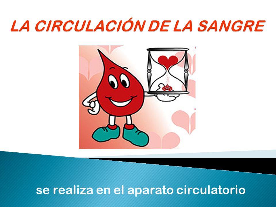 se realiza en el aparato circulatorio