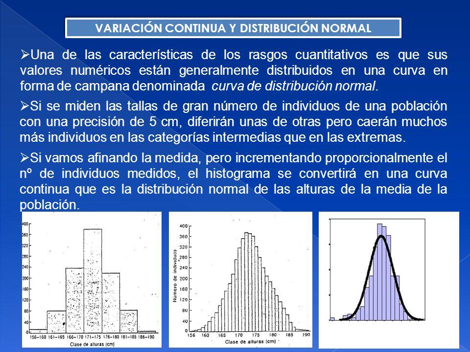 Heredabilidad en sentido amplio: Heredabilidad en sentido restringido: H 2 = Var (g) / Var (p) = 2 g / 2 p 0 H 2 1 h 2 = Var (a) / Var (p) = 2 a / 2 p 0 h 2 1 g = a + d + i a: efecto aditivo de los alelos que forman el genotipo d: efecto no aditivo (o dominante) de los alelos que forman el genotipo i: efecto de interacción entre los genes (epistasia) h 2 H 2 p: valor fenotípico de un individuo g: efecto medio del genotipo e: efecto del ambiente p = g + e HEREDABILIDAD Mide la proporción de la varianza fenotípica total que está determinada por la varianza genética aditiva y, por tanto, excluye la contribución debida a la varianza dominante y epistática.