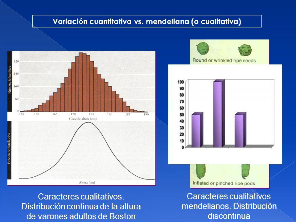 VALORES EN GENETICA CUANTITATIVA a.- Valor fenotípico.