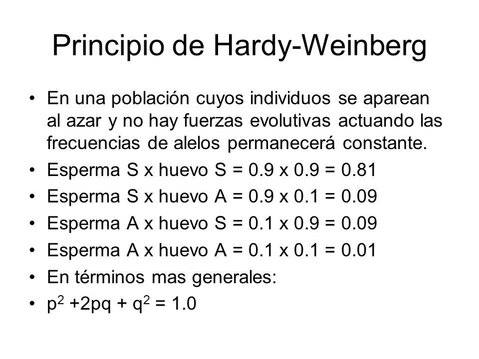 Principio de Hardy-Weinberg En una población cuyos individuos se aparean al azar y no hay fuerzas evolutivas actuando las frecuencias de alelos permanecerá constante.
