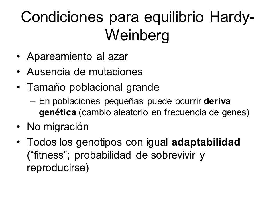 Condiciones para equilibrio Hardy- Weinberg Apareamiento al azar Ausencia de mutaciones Tamaño poblacional grande –En poblaciones pequeñas puede ocurrir deriva genética (cambio aleatorio en frecuencia de genes) No migración Todos los genotipos con igual adaptabilidad (fitness; probabilidad de sobrevivir y reproducirse)