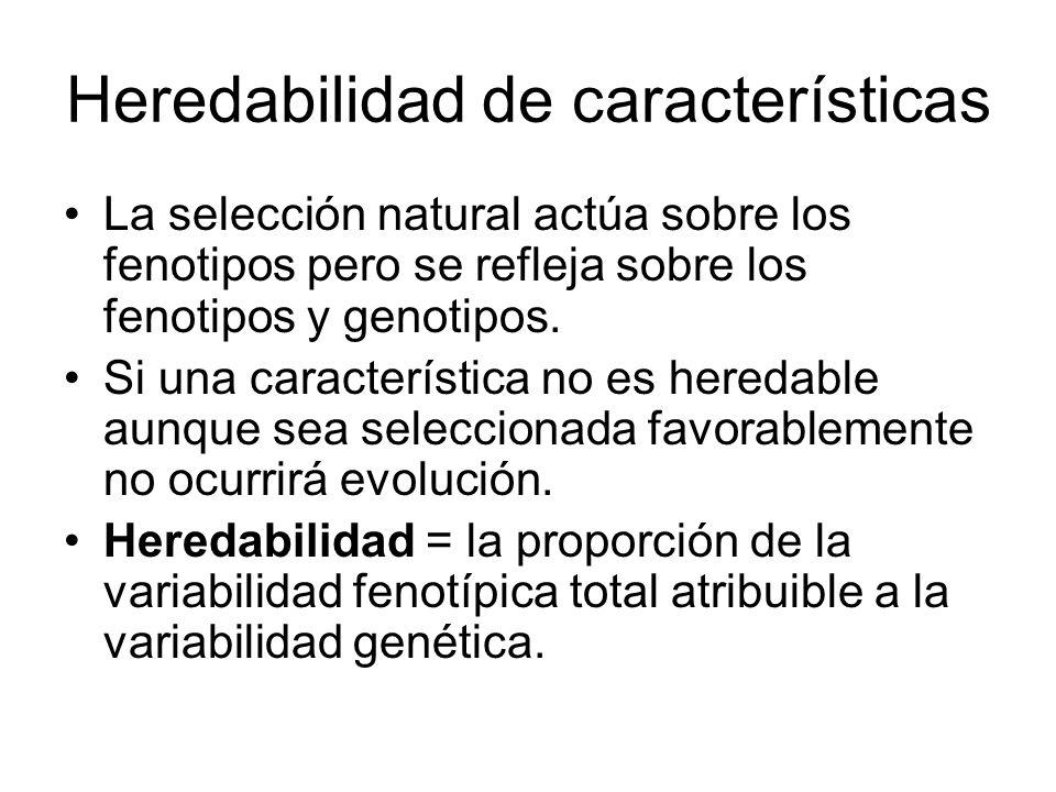 Heredabilidad de características La selección natural actúa sobre los fenotipos pero se refleja sobre los fenotipos y genotipos.