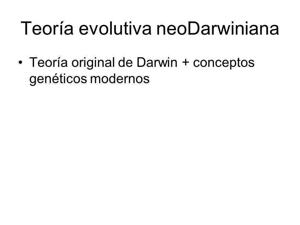 Teoría evolutiva neoDarwiniana Teoría original de Darwin + conceptos genéticos modernos