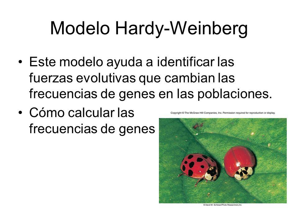 Modelo Hardy-Weinberg Este modelo ayuda a identificar las fuerzas evolutivas que cambian las frecuencias de genes en las poblaciones.