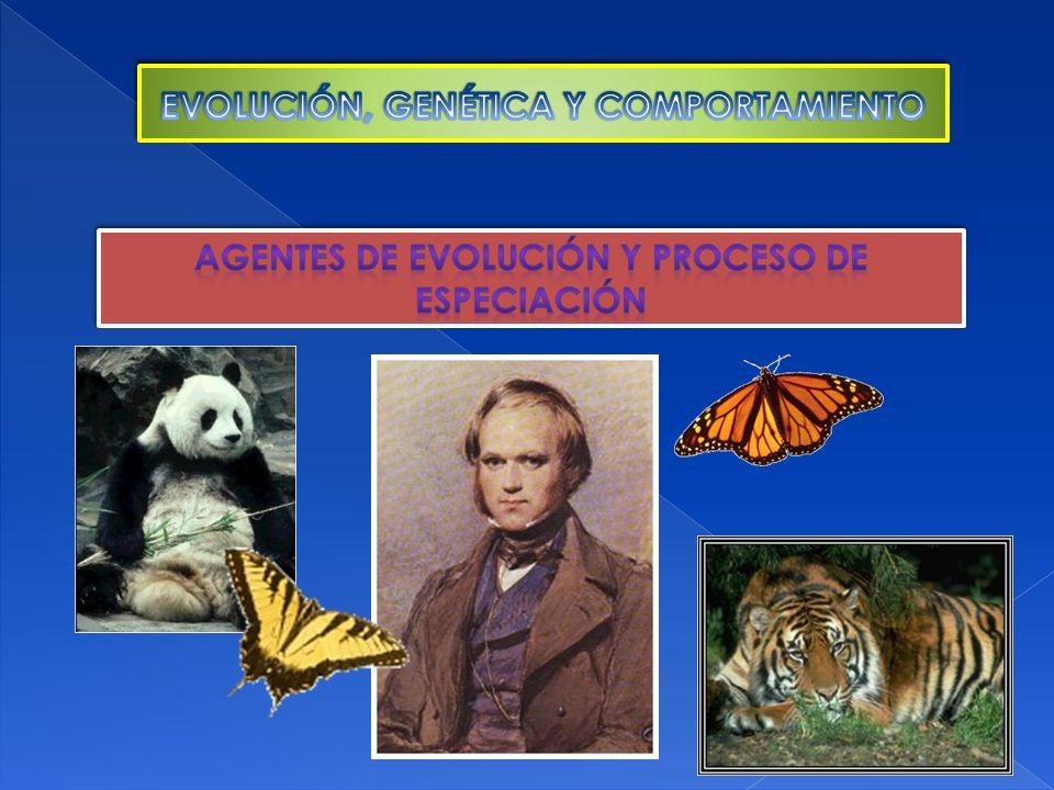 Especiación alopátrica: este tipo de especiación es el más común, propuesto por Mayr en 1942, es una especiación por aislamiento geográfico.