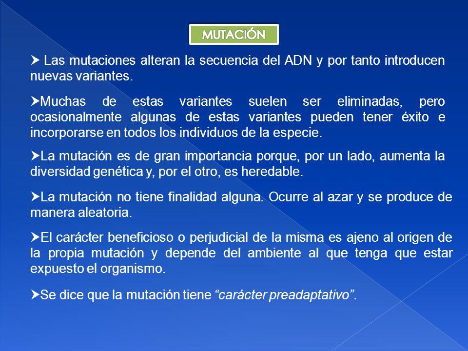 Carácter preadaptativo de una mutación: ADAPTACIÓNINADAPTACIÓN SÍNO INADAPTACIÓN NEUTRA ADAPTACIÓN MUTACIÓN CAMBIO AMBIENTAL