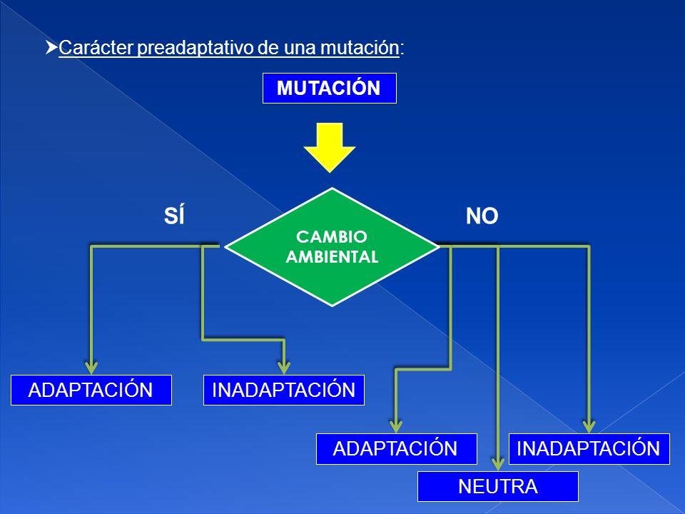 La aparición de mutaciones en las poblaciones se evalúa a través de la tasa de mutación: es la frecuencia en la que se producen nuevas mutaciones en un gen o en secuencia de ADN en cada generación.