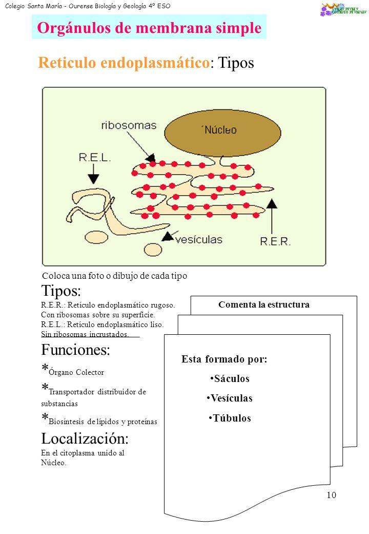 8 O2O2 CO 2 H2OH2O ATP Anabolismo Célula HETERÓTROFA GLUCOSA materia orgánica Diferencia ambos tipos de células: autótrofa y heterótrofa Colegio Santa