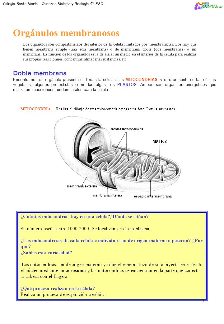 3 Membrana Plasmática: Cita su composición química: * Colesterol *Fosfolípidos *Esfingolípidos *Glucoproteínas Dibuja su estructura molecular: Según e