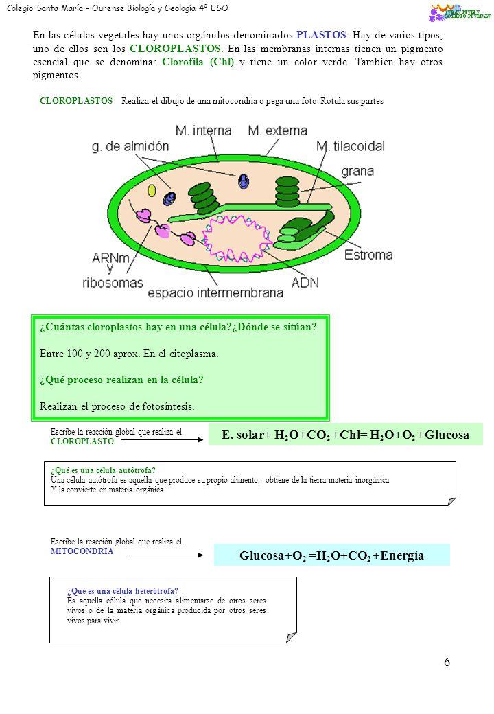 4 Citoplasma ¿Qué es exactamente? El citoplasma es la parte de la célula comprendida entre la membrana y el núcleo que consta de : Hialoplasma o Citos