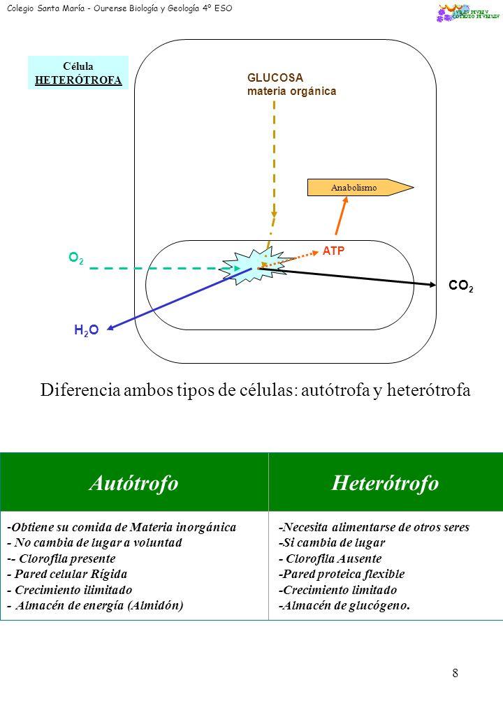 7 METABOLISMO ES: Conjunto de procesos biológicos de asimilación o destrucción de materia que se produce en le organismo vivo con gasto (anabolismo) o desprendimiento (catabolismo) de energía.