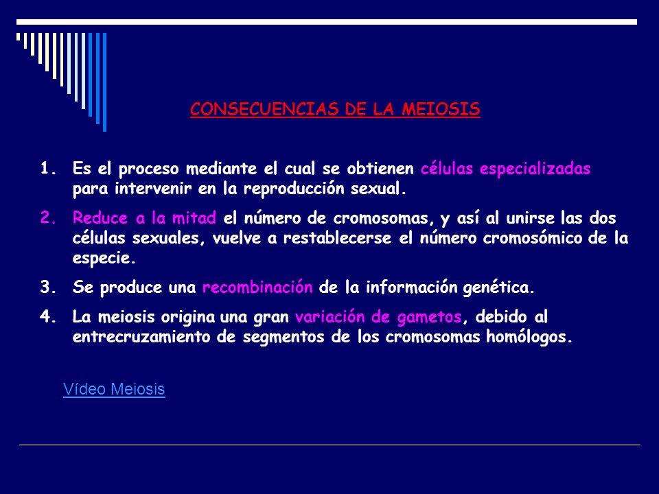 CONSECUENCIAS DE LA MEIOSIS 1.Es el proceso mediante el cual se obtienen células especializadas para intervenir en la reproducción sexual. 2.Reduce a