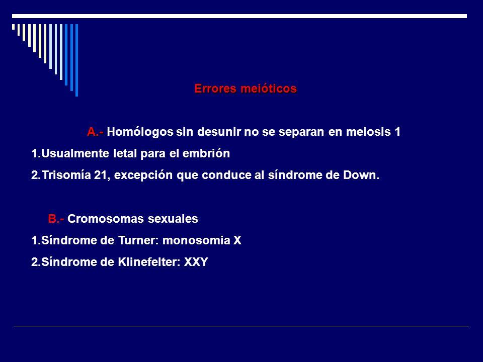 Errores meióticos A.- A.- Homólogos sin desunir no se separan en meiosis 1 1.Usualmente letal para el embrión 2.Trisomía 21, excepción que conduce al