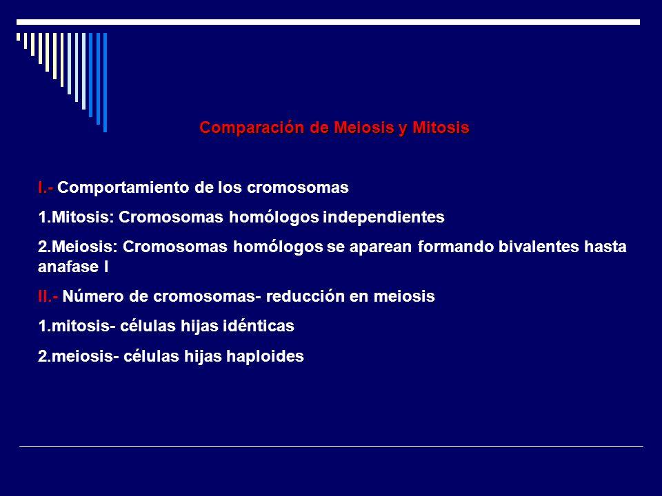 Comparación de Meiosis y Mitosis I.- I.- Comportamiento de los cromosomas 1.Mitosis: Cromosomas homólogos independientes 2.Meiosis: Cromosomas homólog