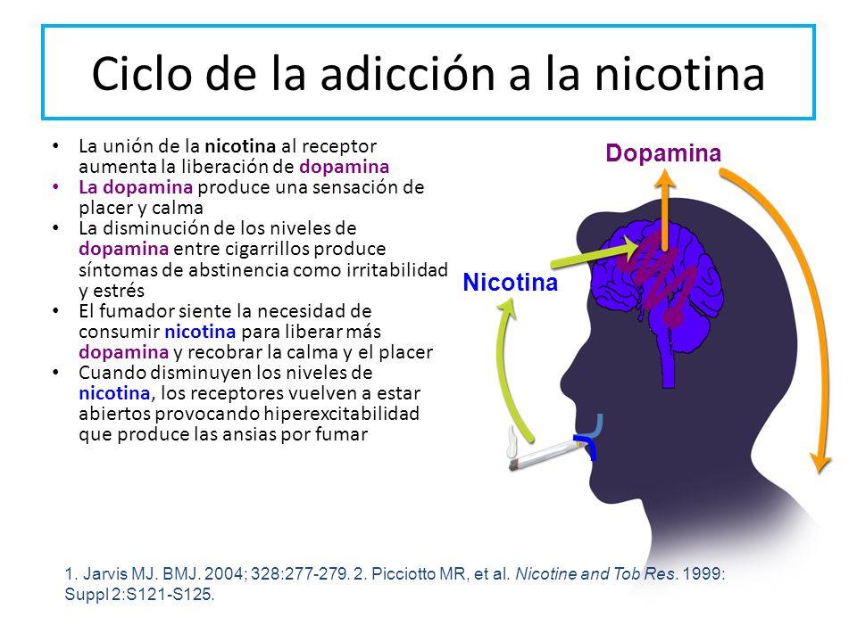 Ciclo de la adicción a la nicotina La unión de la nicotina al receptor aumenta la liberación de dopamina La dopamina produce una sensación de placer y