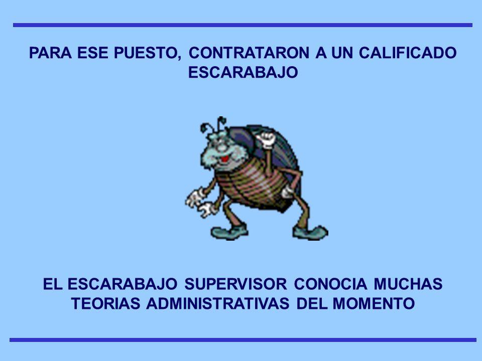 PARA ESE PUESTO, CONTRATARON A UN CALIFICADO ESCARABAJO EL ESCARABAJO SUPERVISOR CONOCIA MUCHAS TEORIAS ADMINISTRATIVAS DEL MOMENTO