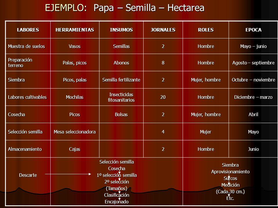 EJEMPLO: Papa – Semilla – Hectarea LABORESHERRAMIENTASINSUMOSJORNALESROLESEPOCA Muestra de suelos VasosSemillas2Hombre Mayo – junio Preparación terren