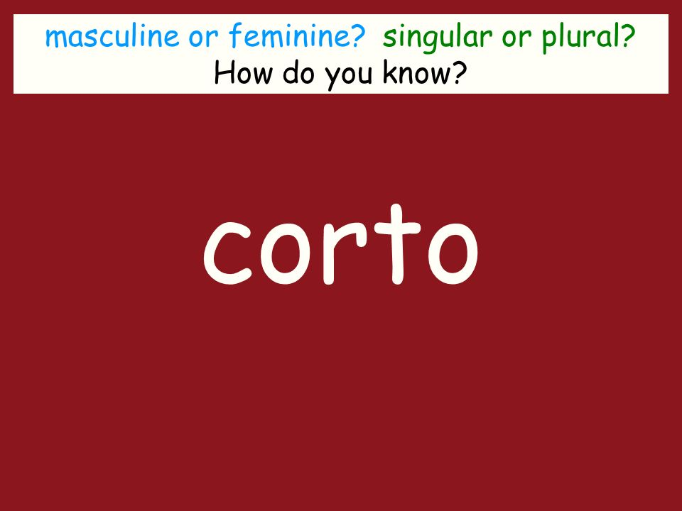 masculine or feminine singular or plural How do you know corto