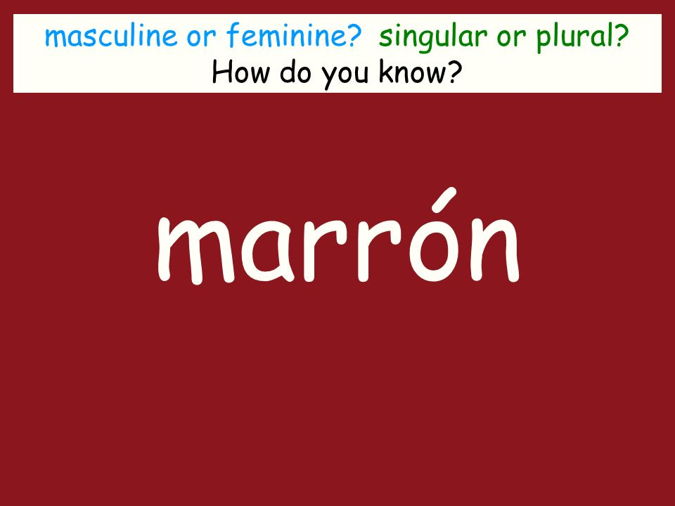 masculine or feminine singular or plural How do you know marrón