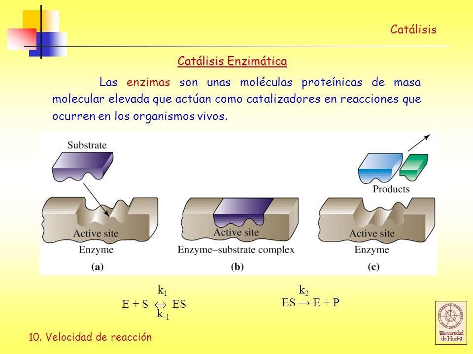 10. Velocidad de reacción Catálisis E + S ES k1k1 k -1 ES E + P k2k2 Catálisis Enzimática Las enzimas son unas moléculas proteínicas de masa molecular