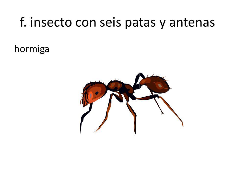 f. insecto con seis patas y antenas hormiga
