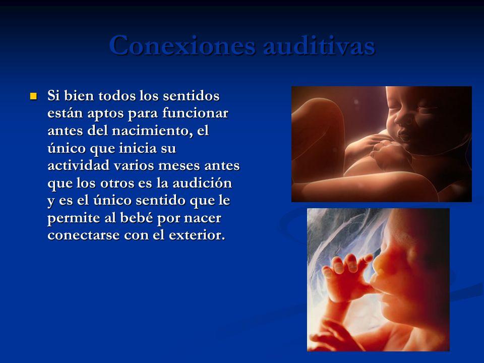Conexiones auditivas Si bien todos los sentidos están aptos para funcionar antes del nacimiento, el único que inicia su actividad varios meses antes que los otros es la audición y es el único sentido que le permite al bebé por nacer conectarse con el exterior.