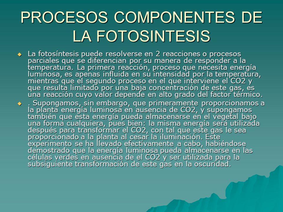 PROCESOS COMPONENTES DE LA FOTOSINTESIS La fotosíntesis puede resolverse en 2 reacciones o procesos parciales que se diferencian por su manera de resp