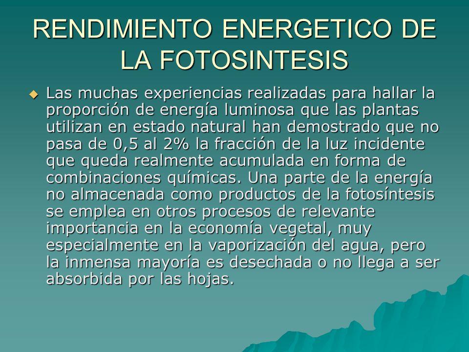 RENDIMIENTO ENERGETICO DE LA FOTOSINTESIS Las muchas experiencias realizadas para hallar la proporción de energía luminosa que las plantas utilizan en