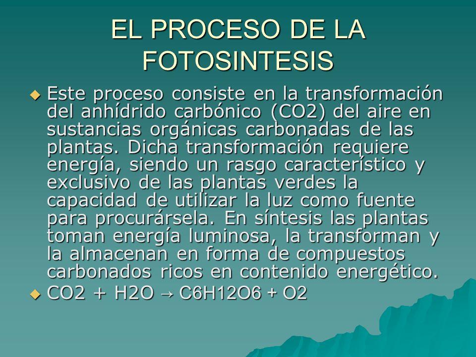 EL PROCESO DE LA FOTOSINTESIS Este proceso consiste en la transformación del anhídrido carbónico (CO2) del aire en sustancias orgánicas carbonadas de