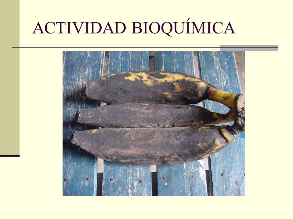 ACTIVIDAD BIOQUÍMICA