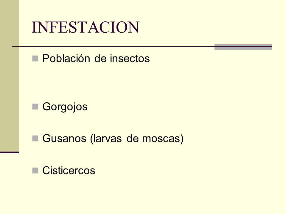 INFESTACION Población de insectos Gorgojos Gusanos (larvas de moscas) Cisticercos
