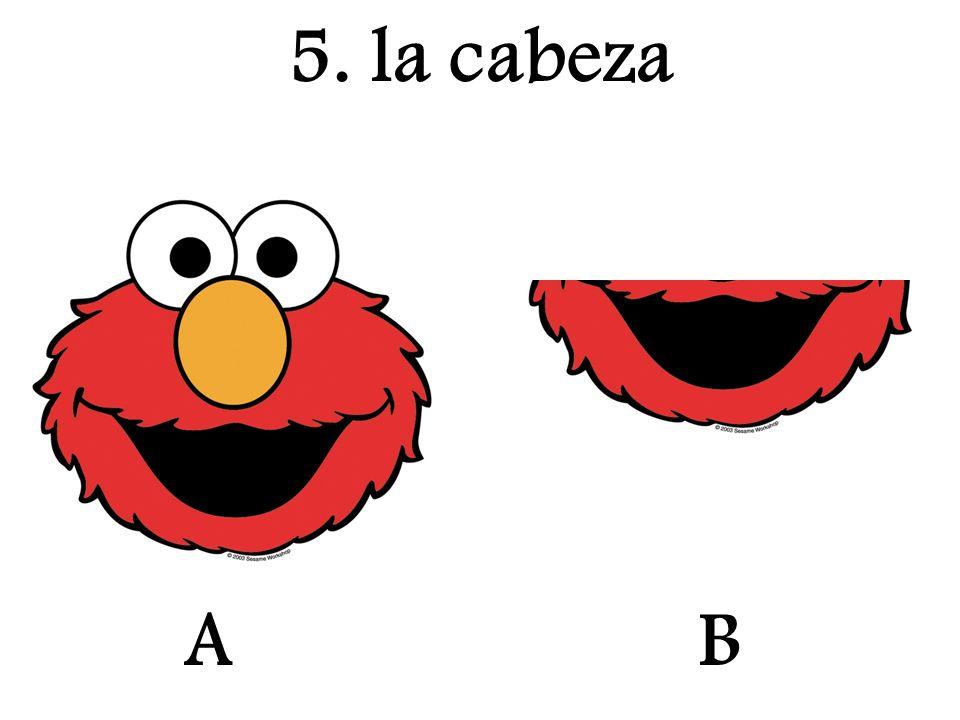 A 5. la cabeza B