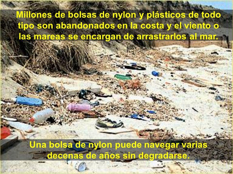 Millones de bolsas de nylon y plásticos de todo tipo son abandonados en la costa y el viento o las mareas se encargan de arrastrarlos al mar. Una bols