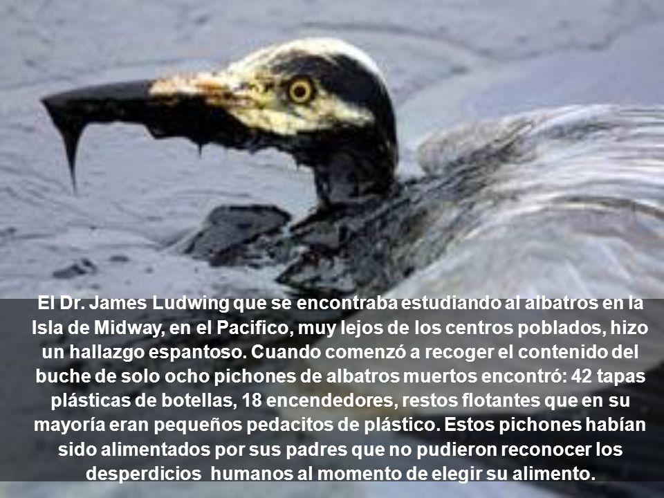 El Dr. James Ludwing que se encontraba estudiando al albatros en la Isla de Midway, en el Pacifico, muy lejos de los centros poblados, hizo un hallazg